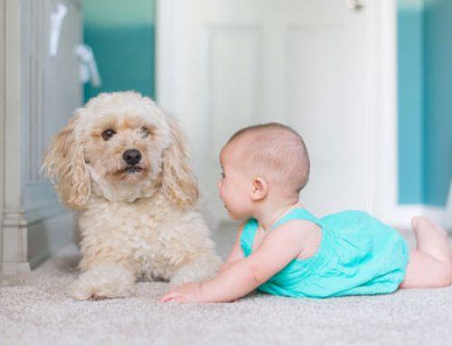 Consejos del hogar: Cómo impedir que se deshilachen las moquetas